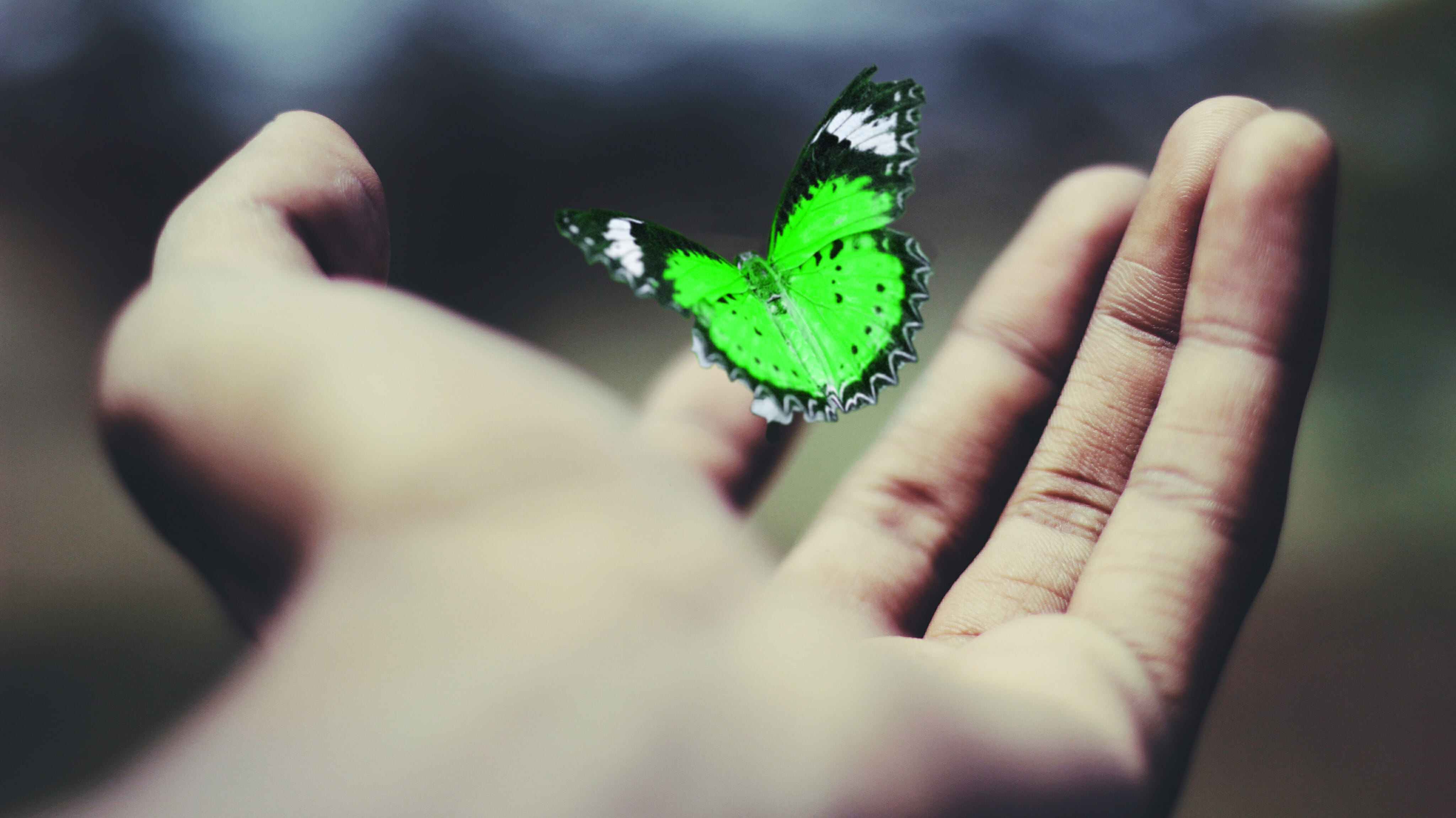 Hand image with butterfly