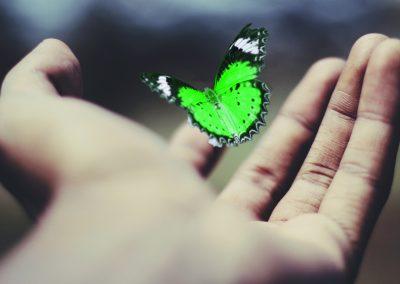 Molly Hurst Butterfly
